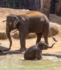 Melbourne Zoo, Parkville